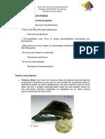 PRACTICAS DE ROCAS ÍGNEAS.pdf