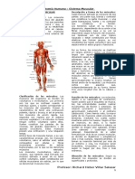 El Sistema Muscular.
