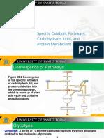 Catabolic Pathways Chapter28
