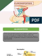 vasopresina