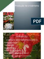 Cópia de Crisantemo
