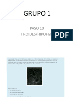 Pasos Neuro Endocrino