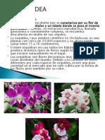 LA ORQUIDEA.pptx