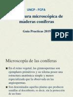 Guia Practicas Microscopia Coniferas