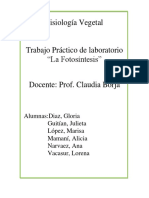 cloroplastos.docx