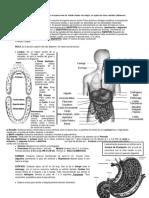 sistema digestivo 2do.docx