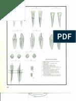 ATLAS DE MORFOLOGIA DENTAL_Pag 20.pdf