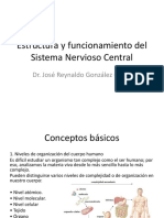 Estructura y Funcionamiento Del Sistema Nervioso Central.
