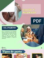 Parto y neonato ( diapositvas)