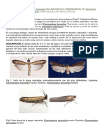 BIOLOGIA de Elasmopalpus Lignosellus en UNA PARCELA EXPERIMENTAL de Saccharum Officinarum