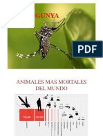 Diferencias Entre Dengue Zika Chikungunya
