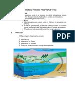 Phosphorus Cycle - Final.docx