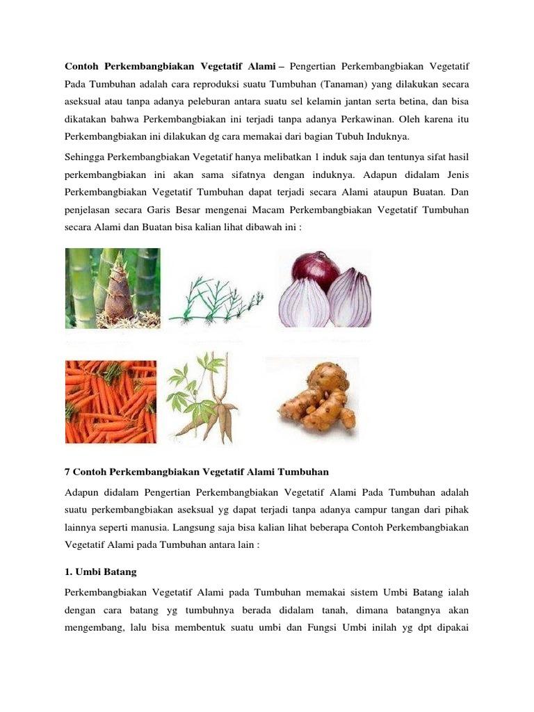 Contoh Perkembangbiakan Vegetatif Alami