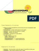 Angiosperms Reviewer