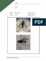 Insectos-predadores11111111111111111111111111111111