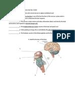 Nervous System Reviewer Practice Test Nov 6 2019