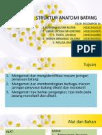 Struktur Anatomi Batang Kel 3.pptx