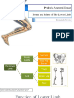 The Lower Extremity.pptx