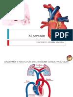 Aparato Cardiovascular 2014