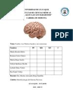 Cerebro y Nucleos Basales