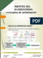 Componentes Del Sistema Endocrino 19 II