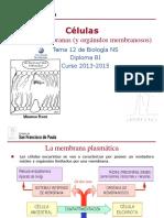 GTP_T12. Células (4ªParte(I)_Membrana y Orgánulos Membranosos) 2013-15