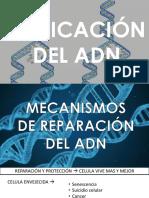 MEcanismos de Reparacion Del ADN