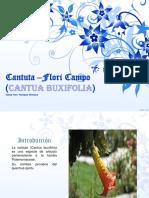 Cantuta(Flori Campo)-Boca de Dragon