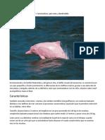 Delfín Rosado Del Amazonas