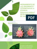 Pitahaya Fisiología Vegetal.pptx