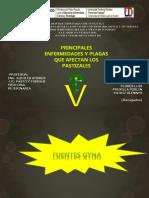 Presentación PASTO (2).pptx