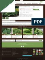 Ienupar Procumbens Nana - GardenExpert.ro