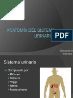 Anatomía Del Sistema Urinario