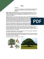 Descripción árboles Colombia
