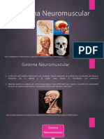Sistema Neuromuscular Presentacin 160212003359