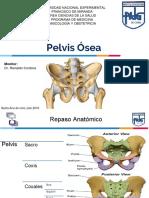 Pelvis Osea Nuevo
