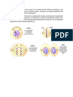 mitosis.docx