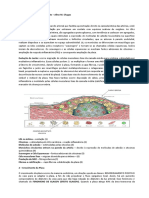 Aterosclerose-Aline 76 p2