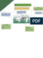 Sistema Digestivo Porcino