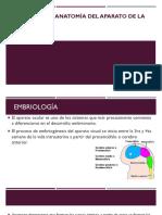1 Embriología y Anatomía Del Aparato de La Visión