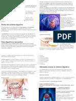 El aparato digestivo o sistema digestivo.docx