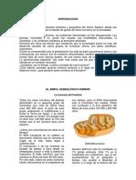 TRAVESIA DEL HOMBRE BASADO EN SPENCER WELLS.pdf
