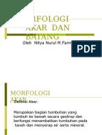 4.Morfologi Akar Dan Batang