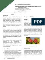 Compilado Final Procesos de Fruver