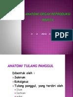 Anatomi genitalia dr M IRWAN SULAIMAN SPOG.ppt