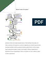Historia Evolutiva de Las Plantas