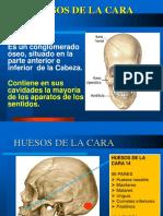anatomia de cara