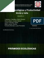 Piramides Ecologicas-productividad Bruta y Neta