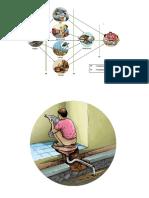 Diagram f Bulat