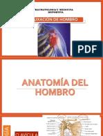 anatomía de hombro
